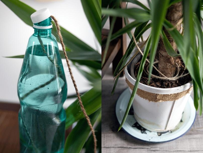 arrosage plante