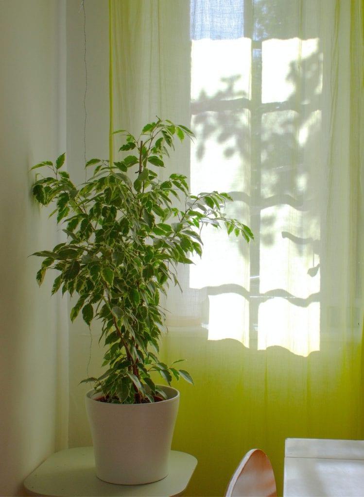 plante ombre