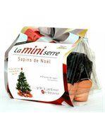 Mini serre 6 pots sapins de Noël preview1