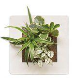 Cadre Végétal Mural - Blanc preview1