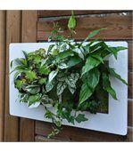 Cadre Végétal Mural Blanc - Double preview1