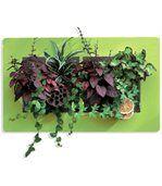 Cadre Végétal Mural Vert - Double preview1