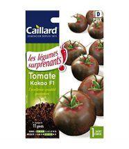 Tomate Kakao hybride F1