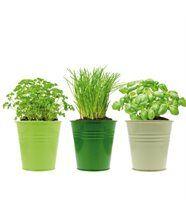 3 pots d'Herbes aromatiques