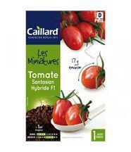 Graines mini Tomates
