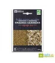 Graines à germer alfalfa bio 50gr diy