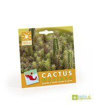Graines cactus en sachet